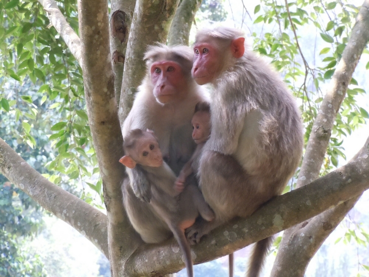 Monkey Family at Ooty